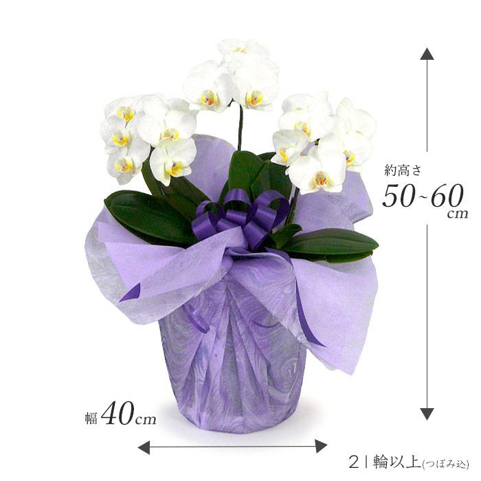 約高さ50~60㎝、幅40㎝、お花は21輪以上